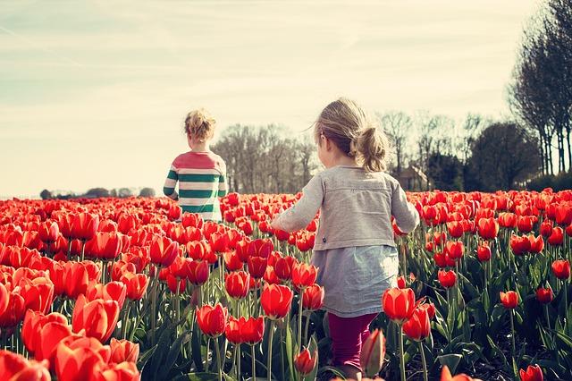 holky na poli tulipánů