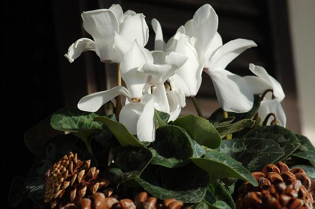 Květina odekorovaná šiškami